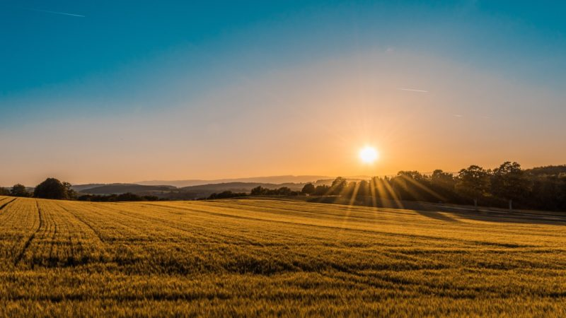 Why Is Maintaining Your Land Important?